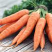 Как хранить морковь зимой